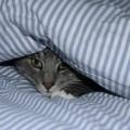 寝汗がひどい時に疑うべき病気と対処法7つ