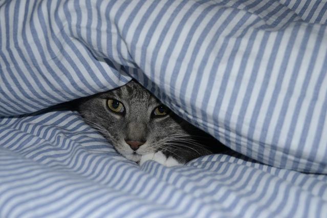 寝汗がひどい時に疑うべき病気と対処法