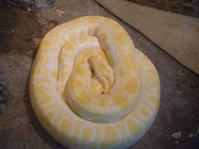 夢に白蛇が出てきたら吉凶どちら?秘められた7つの意味とメッセージ