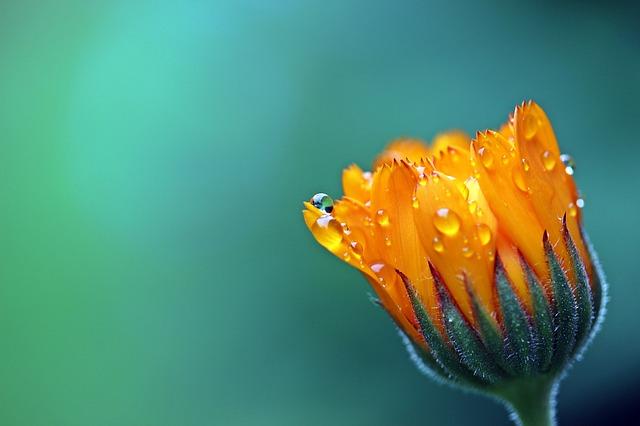 オーラの色がオレンジ色の人の7つの特徴と幸せを引き寄せる方法