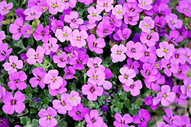 オーラの色が紫色の人の7つの特徴と幸せを引き寄せる方法