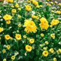 オーラの色が黄色の人の7つの特徴と幸せを引き寄せる方法
