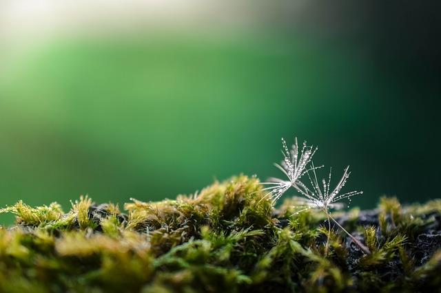 オーラの色が緑色の人の7つの特徴と幸せを引き寄せる方法