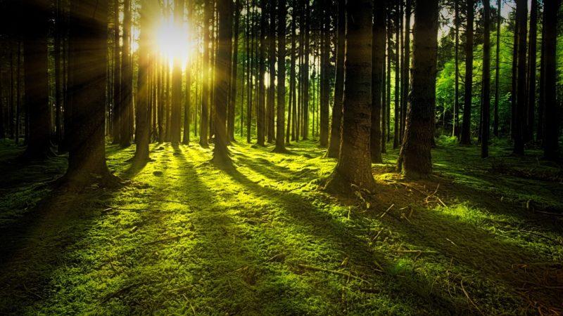 生霊を一刻も早く除霊するための7つの方法